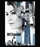 Grey's Anatomy - S14 (2017)